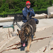 Our K9 Team in action